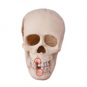 Regeneracja kości